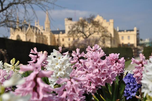 hyacinty na popředí lednického zámku