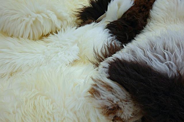 ovčí rouno